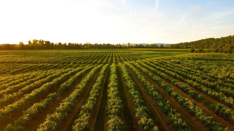 NVP Agrofirma Solodkovodne LLC